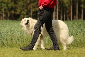Die jungen Wilden</br> @ Hundeplatz Powwerdogs