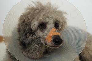 """Erste Hilfe am Hund</br> @ Wirtshaus zum Gutmann """"Weizenstube"""""""