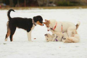 Welpenschule</br> @ Hundeplatz Powwerdogs
